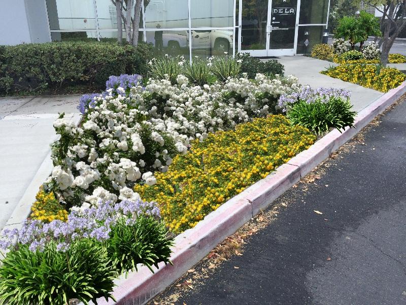 landscape design in orange county, ca
