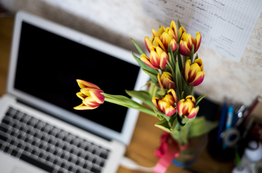 Low Maintenance Indoor Plants to Livin' Up Your Office